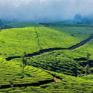 best season to go to Kerala